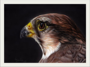 lanner falcon painting
