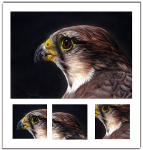 lanner falcon wildlife art