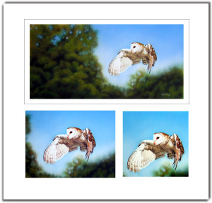 barn owl wildlife art