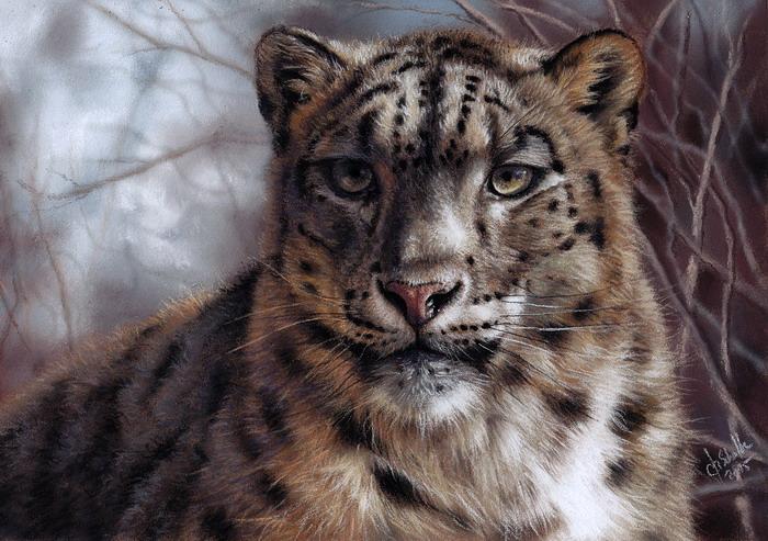 wildlife art snow leopard