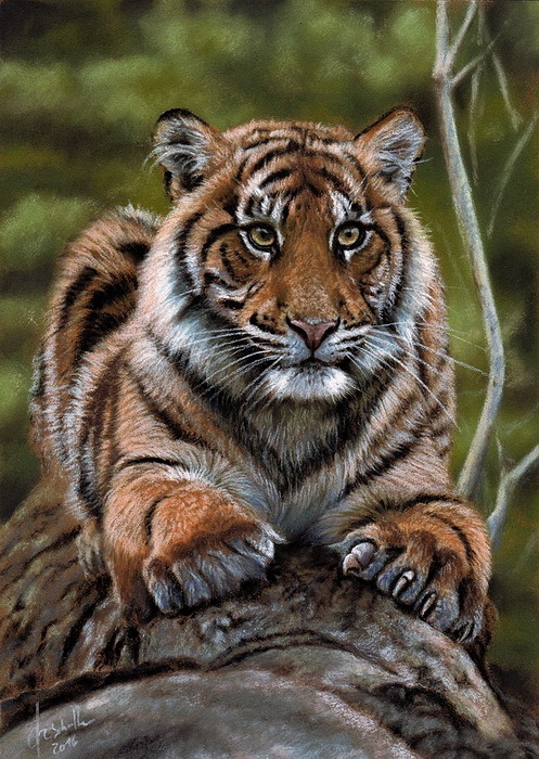 Wildlife art Tiger