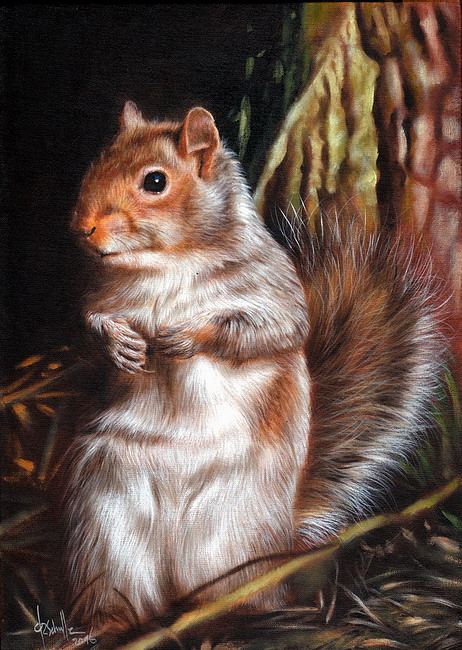 wildlife art Squirrel