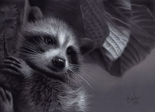 Charcoal drawing Raccoon