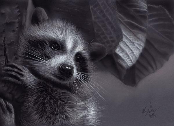 Charcoal drawing Raccoon