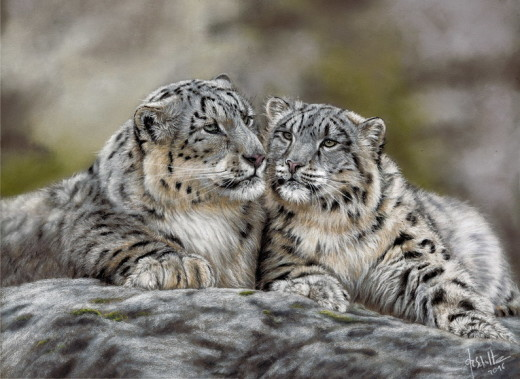 Wildlife painting Snow leopard