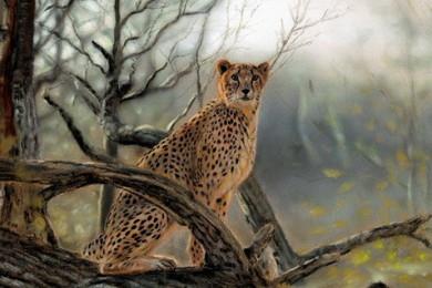 wildlife art Cheetah