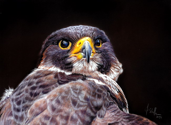 Wildlife art Falcon