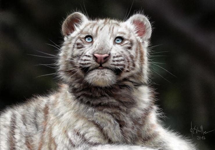 Wildlife art White Tiger Cub
