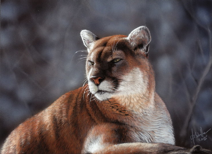 Wildlife art Cougar