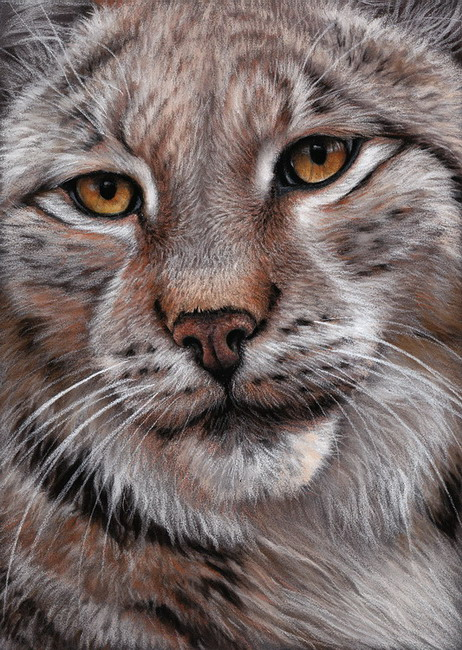 Lynx pastel wildlife art