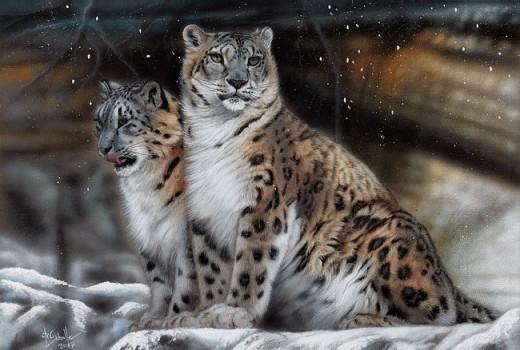 Snowleopard  wildlife painting