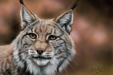 Wildlife art Lynx