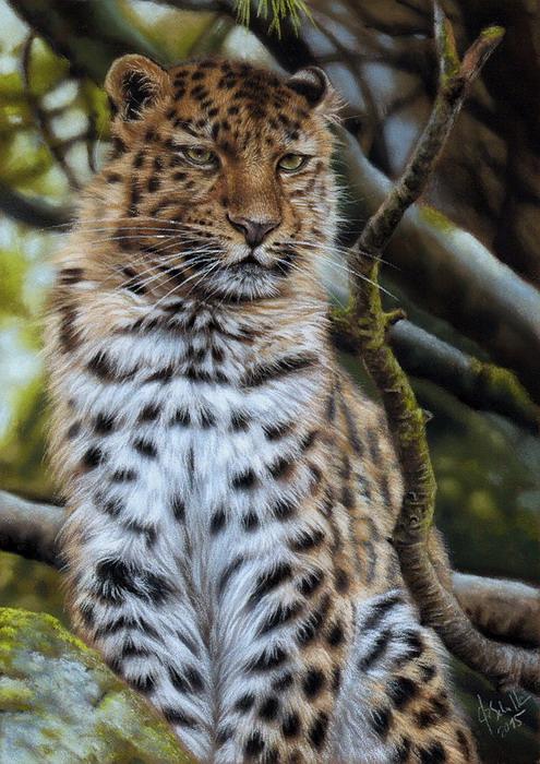 Leopard pastel painting