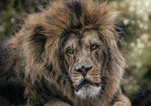 Lion portrait wildlife art