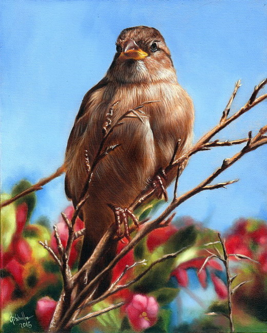 Wildlife Oil Painting Sparrow