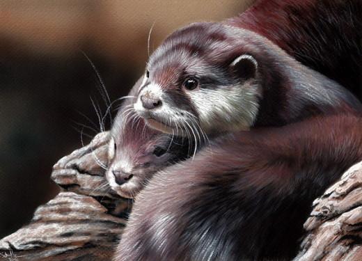 Wildlife art Otter