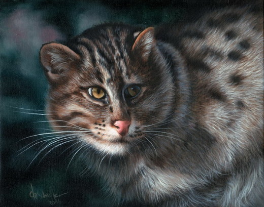 wildlife art fishing cat