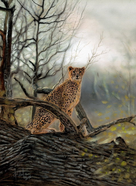 wildlife art Cheetah