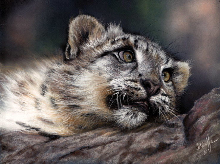 wildlife art Snow Leopard cub