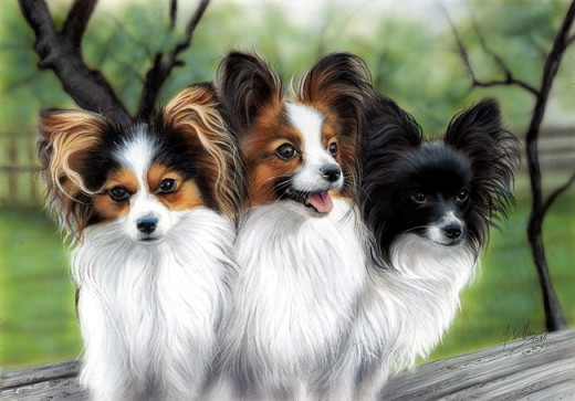 Pet art Papillon
