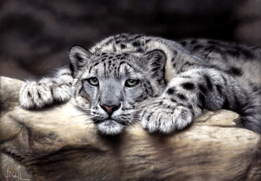 wildlife art snow leopard