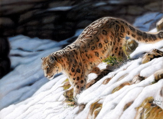 snow leopard wildlife art