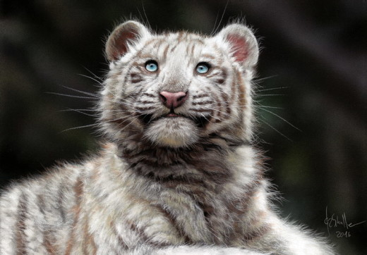 Wildlife art White Tiger Cub