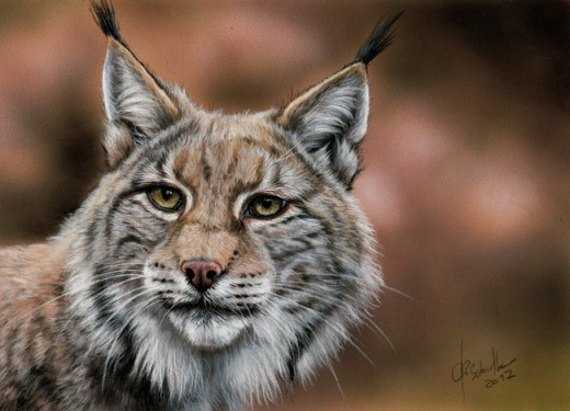 Wildlife art Lynx