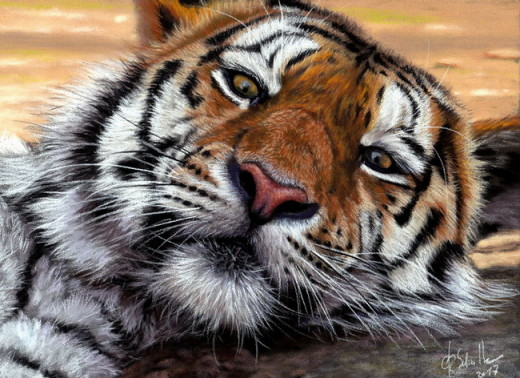 Wildlife art pastel Tiger