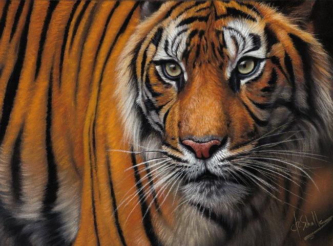 pastel painting Tiger